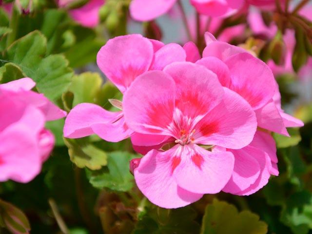 Комнатные растения полезные для здоровья