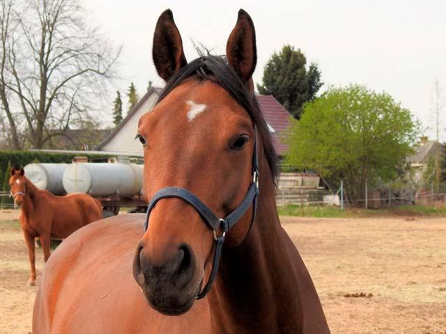 Иппотерапия-лечебная верховая езда