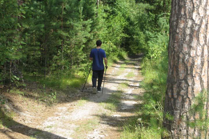Вместе весело шагать! Или польза от скандинавской ходьбы.