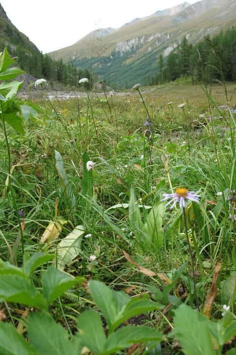 Травы энергетики - натуральные адаптогены